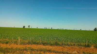 fazenda para soja