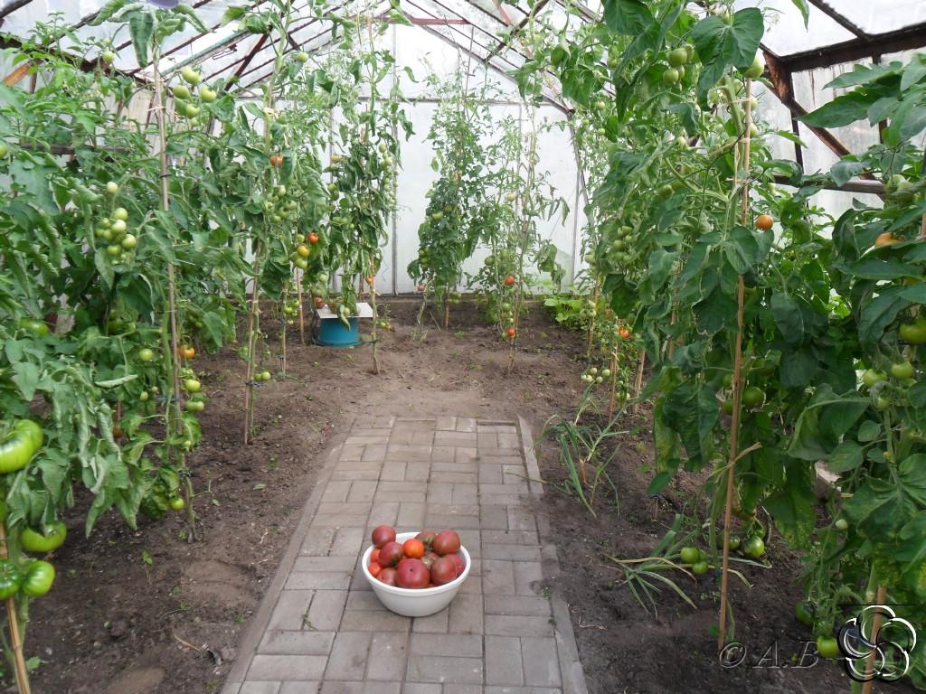 querbeet im garten black krim tomaten. Black Bedroom Furniture Sets. Home Design Ideas