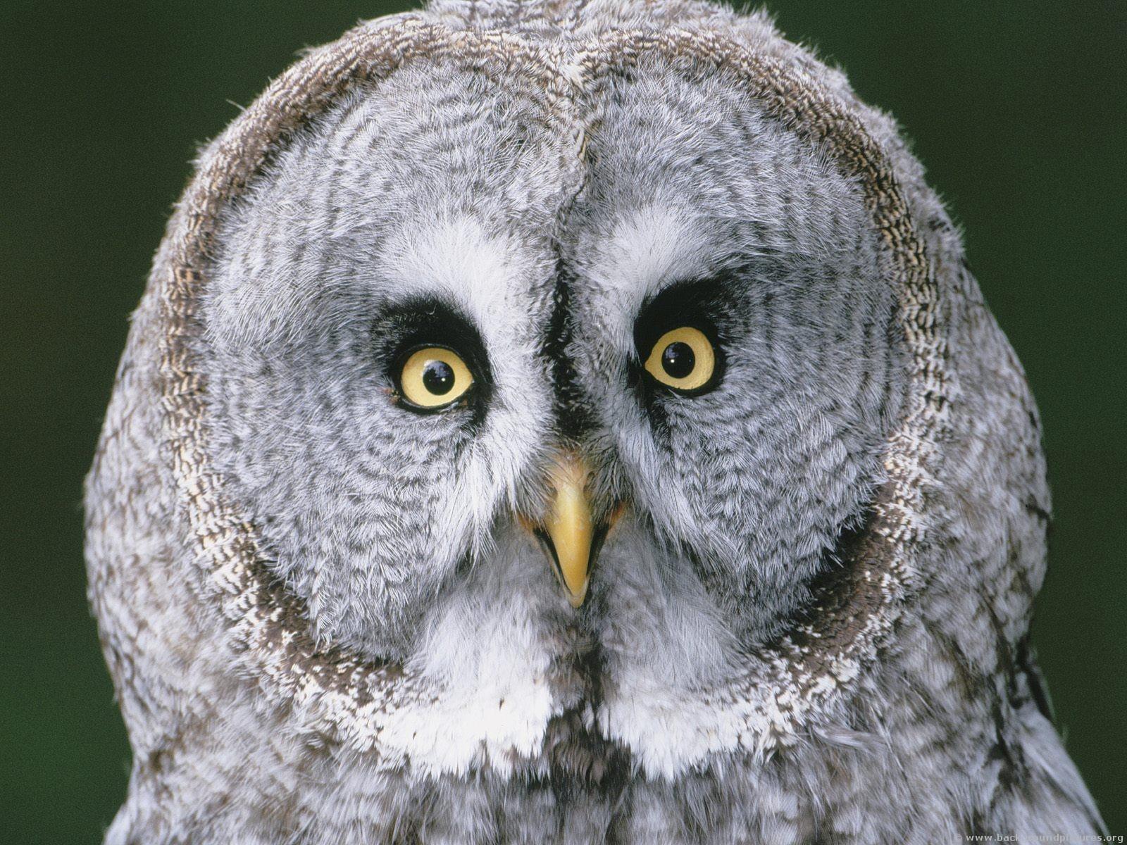 never ending JOURNEY: owl fact..