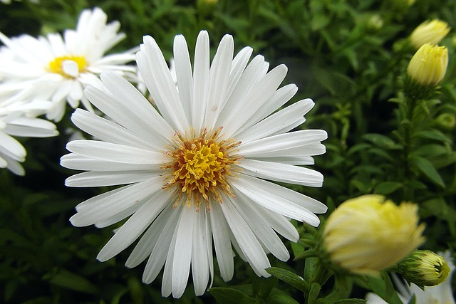 y nghia hoa thach thao trang