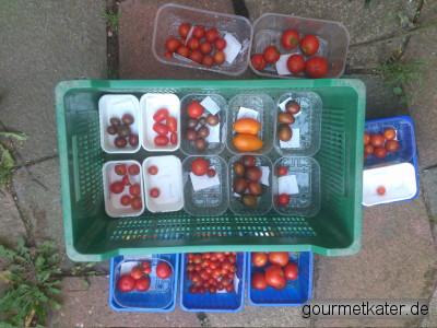 alte Tomate-Sorten
