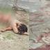 REWA : बहुती जल प्रपात में निर्वस्त्र हालत में मिली युवती की लाश, रेपकर हत्या की आशंका : मौके पर पहुँची पुलिस