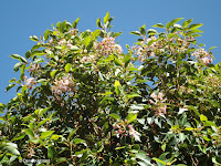 Blooming trees - Wellington Botanic Garden, New Zealand