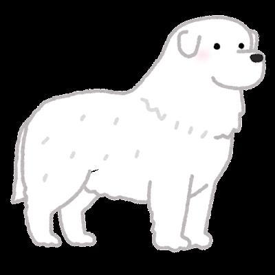 グレート・ピレニーズのイラスト(犬)