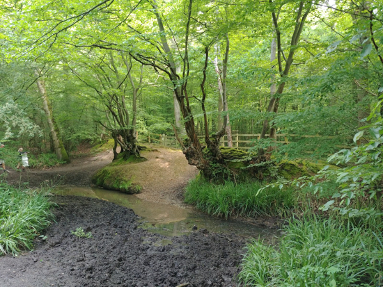 Photograph of Spital Brook, crossed by a wooden footbridge Image by Hertfordshire Walker released under Creative Commons BY-NC-SA 4.0