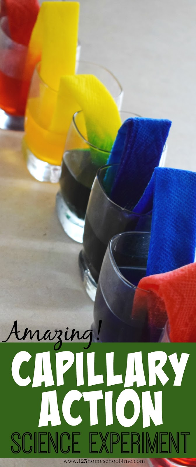 Capillary Action Science Experiment - Tapatalk