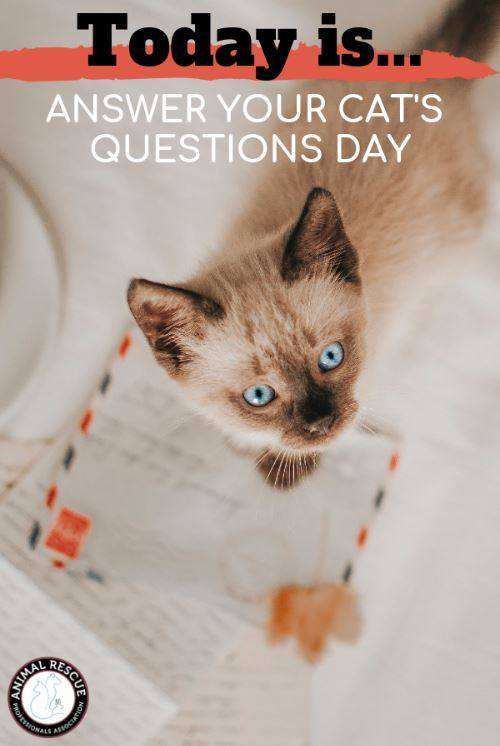 National Answer Your Cat's Questions Day Wishes for Instagram