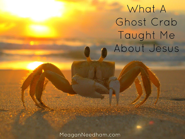 What a Ghost Crab Taught Me About Jesus
