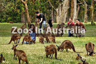 Zoos In Australia