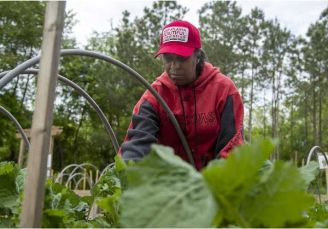 Fazenda deixa pessoas carentes colherem frutas e vegetais de graça (EStados Unidos)