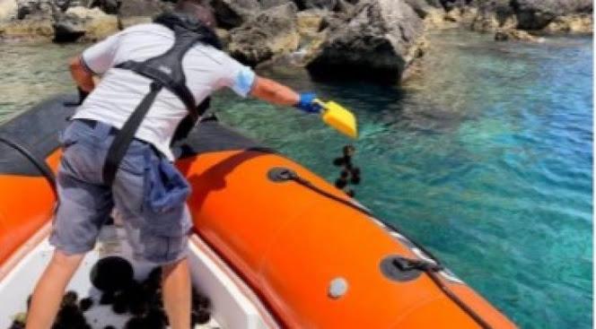 Isole Tremiti: multato un pescatore di frodo di ricci di mare