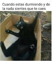 despertando asustado gato meme