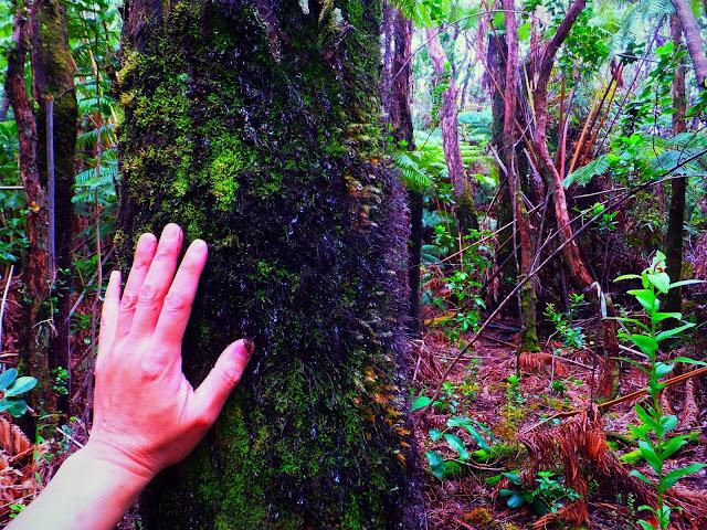 木に触れる手の写真