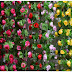 8+ Aneka Bunga Plastik Untuk Dekorasi Ruangan Yang Cantik