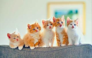 تفسير مشاهدة القطط في منام المتزوجة