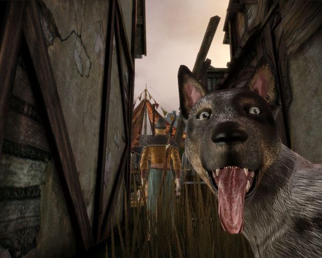 Dragon Age Origins dog