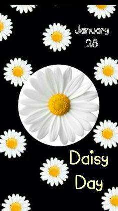 National Daisy Day Wishes Beautiful Image
