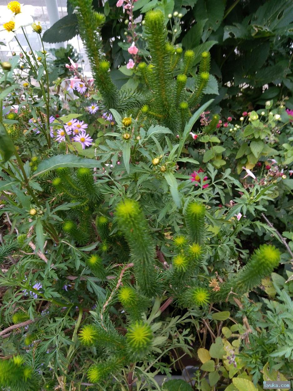 ニョキニョキトゲトゲの植物