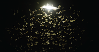 Insects swarming a light