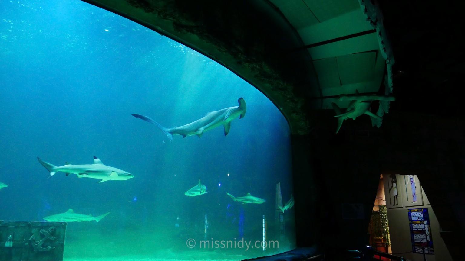 akuarium ikan hiu di seaworld ancol