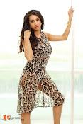 Sanjana Glamours Stills-thumbnail-4