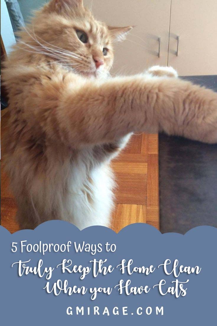 5 Foolproof Ways to Truly Keep the Home Clean When you Have Cats