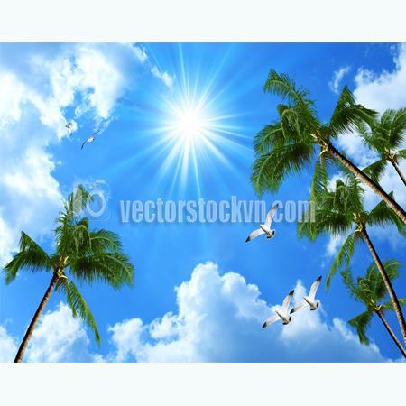 Tranh Hàng Dừa bãi biển - Tranh dán tường bầu trời hàng dừa