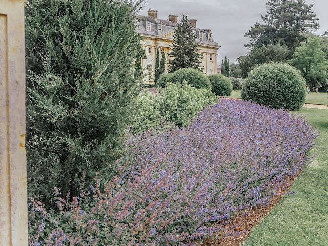 National Trust lavender planting