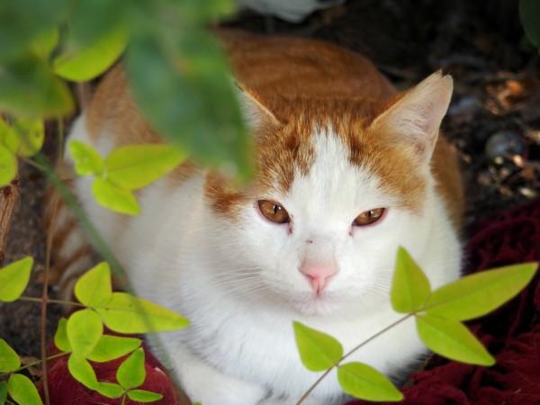 gatos campo del principe