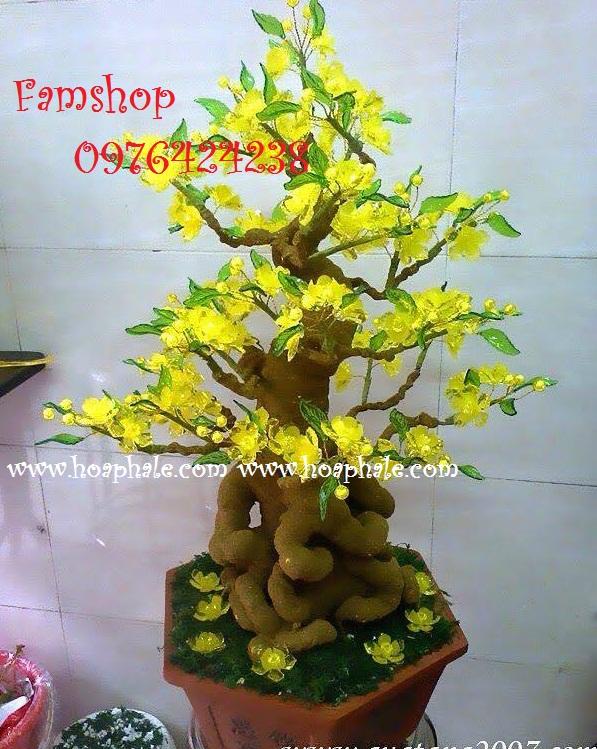 Goc bonsai cay hoa mai tai Pham Tuan Tai
