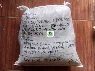 Benih padi yang dibeli   MUJIONO Grobogan, Jateng.  (Setelah packing karung).