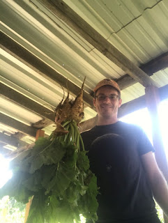 Farmer man holding a sugar beet