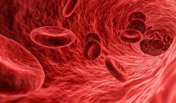 Low White BloodCell - कम सफेद रक्त कोशिका की गिनती