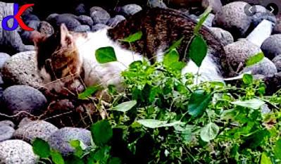 Kucing galak – Manfaatnya bagi kesehatan | Bagian 3