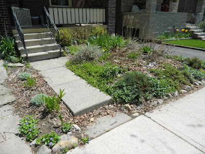 Monarch Park spring garden clean up before by Paul Jung Gardening Services Toronto