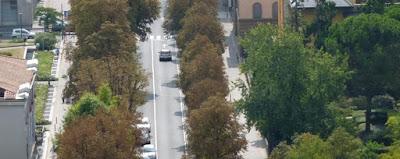 Perchè alberi crescono prima in città che in campagna