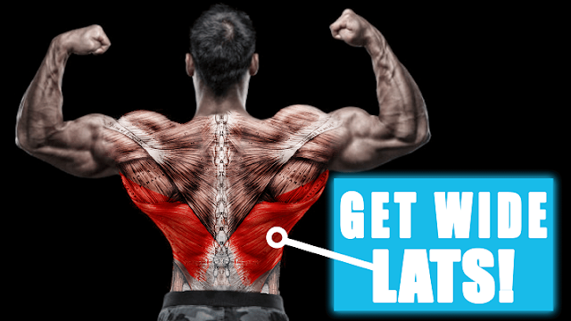 Bodybuilding workouts: Lats Exercises & Exercise Guides