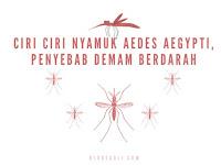 Menjadi Penyebab Demam Berdarah, Ternyata Begini Ciri – Ciri Nyamuk Aedes Aegypti
