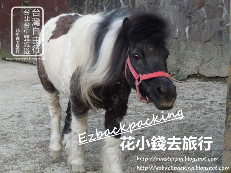 木栅動物園驢仔迷你馬