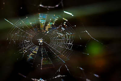 Five Spider PDFs for Halloween from TpT!