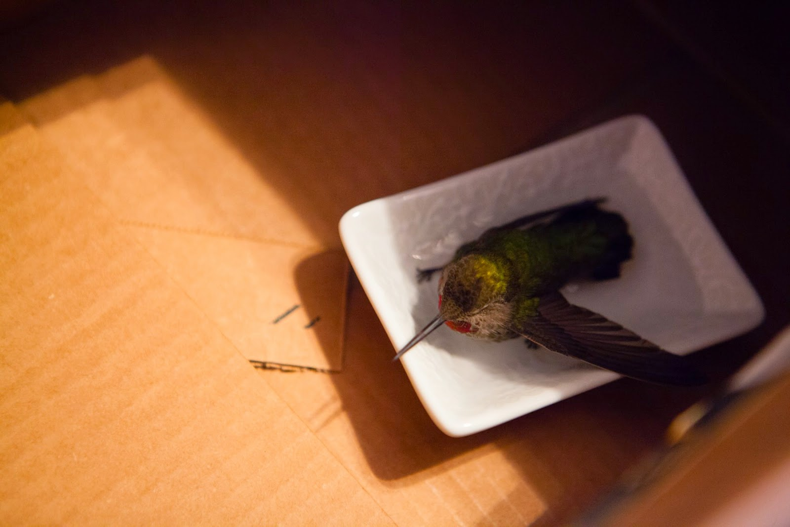 Taking care of a hummingbird