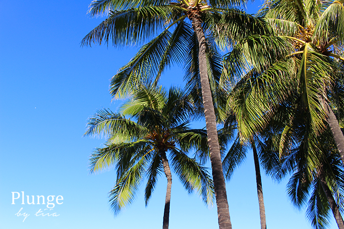 Palm trees on waikiki beach, Hawaii