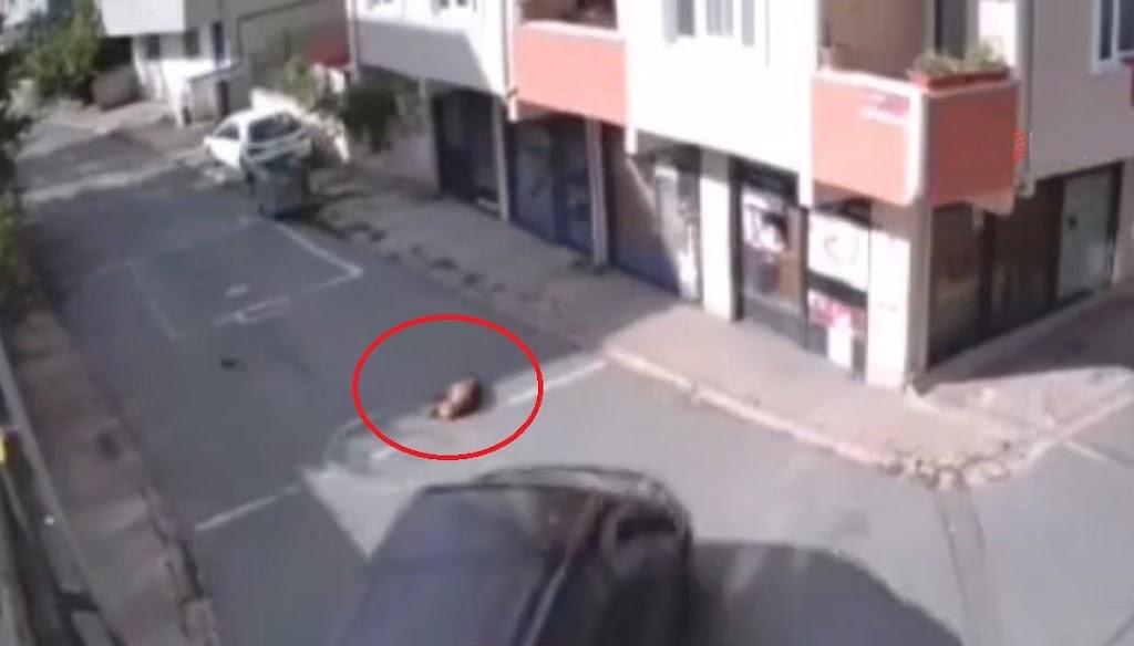Yol ortasında uyuyan köpeği ezen cani yakalandı