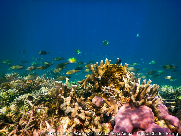 Coral reef at Warduwer beach
