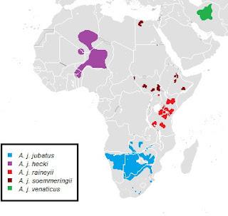 Subspecies of Cheetah % their range