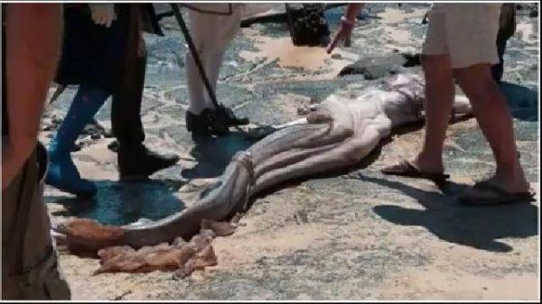 Lại xuất hiện xác người cá xinh đẹp trên bờ biển Tây Ban Nha