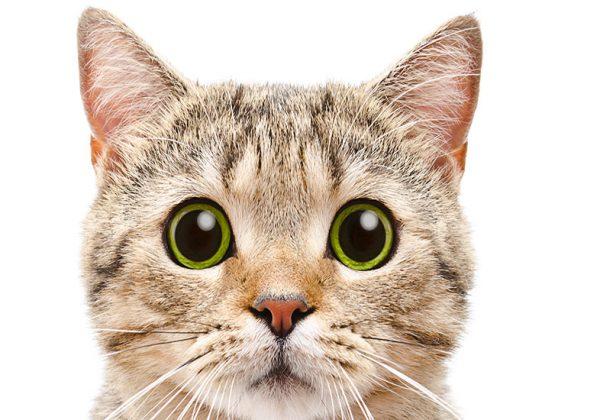 Pandémie : Un deuxième chat en France testé positif au coronavirus