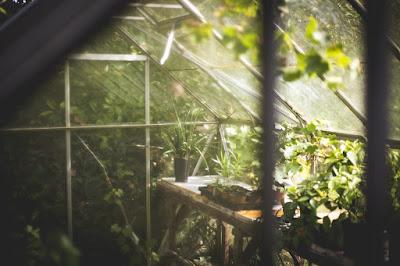 Un jardín en el invernadero