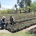 Produce 5 millones de árboles el vivero de la SMAE