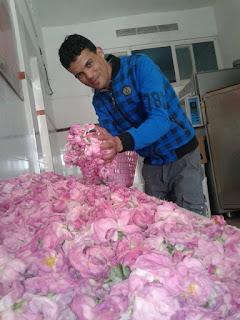الورد المطحون